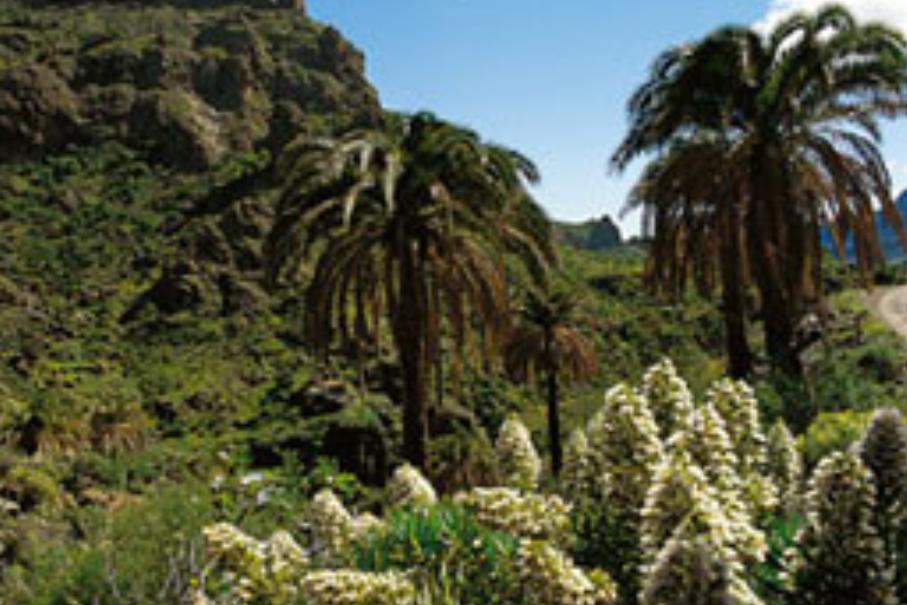 GCOM - Gran Canaria O-Meeting by Orientacion Canarias